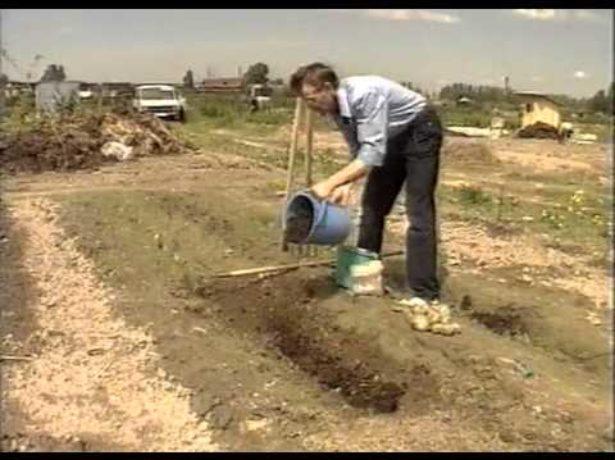 Питательная почва под картофель