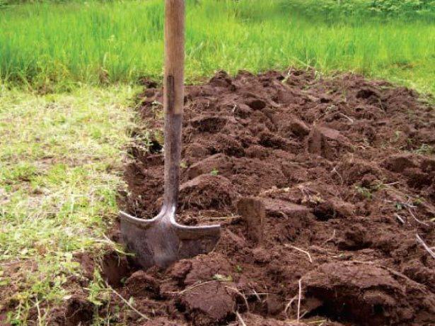 Подходящая почва для выращивания картофеля