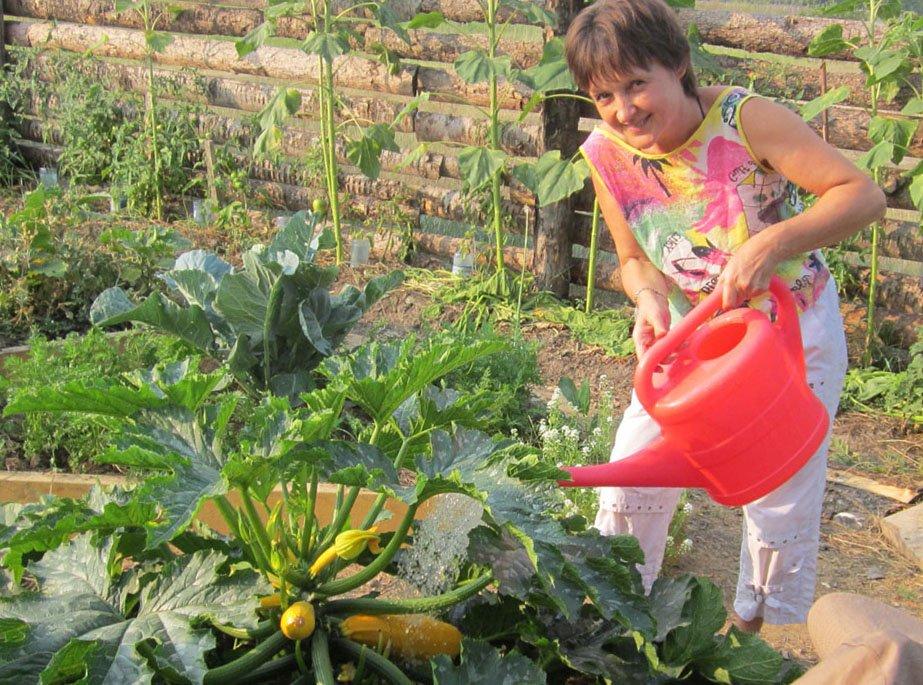 Выращивание кабачков и уход за ними 12