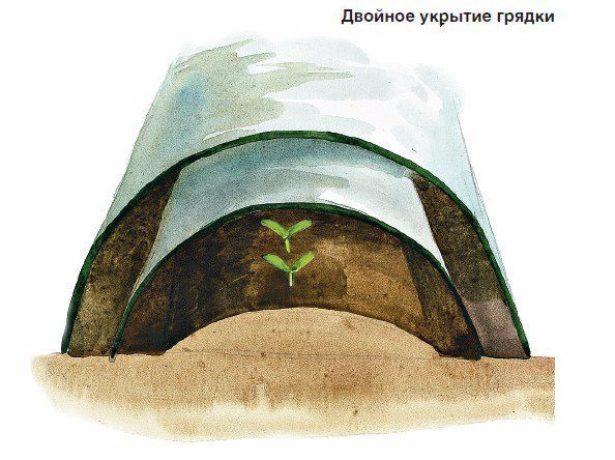 Схема укрытия рассадника