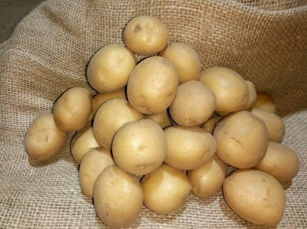 Семенной картофель Ривьера
