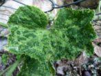 Зелёная мозаика