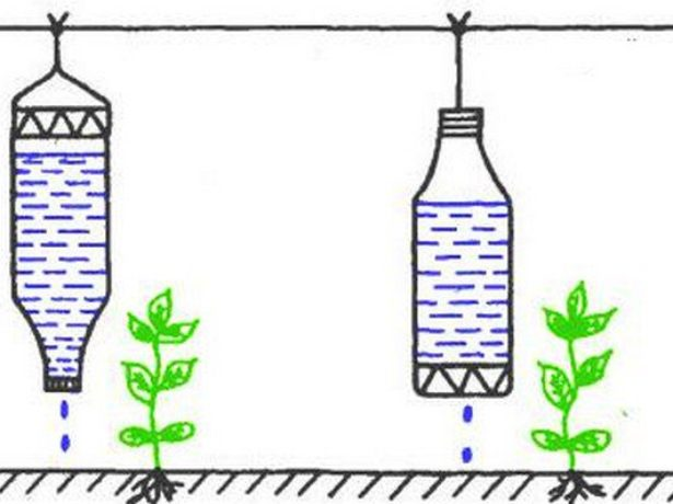 Бутылочный капельный полив из подвешенной бутылки