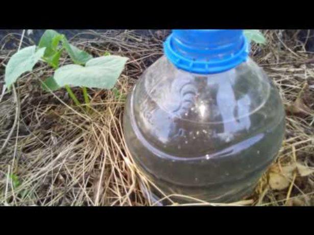 Бутылочный капельный полив из прикопанной бутылки