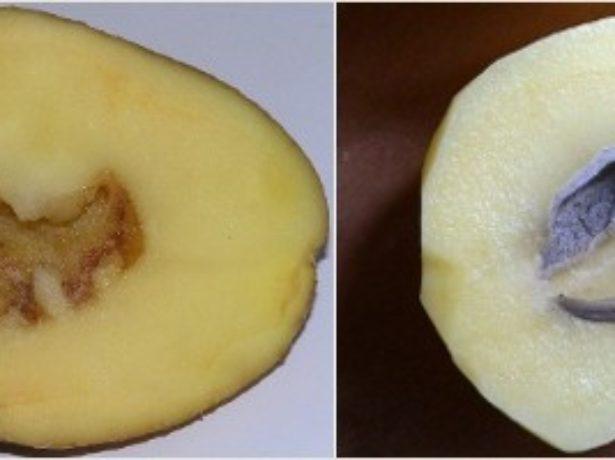 Дупла в мякоти картофеля