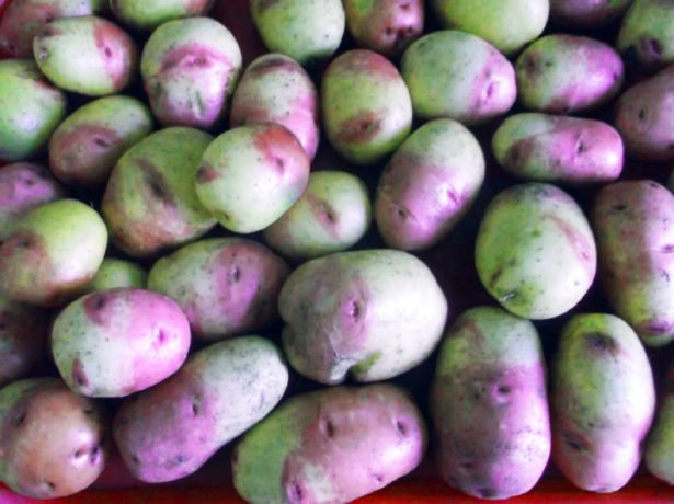 Картофель сорта Иван-да-Марья