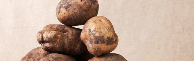 Картофель Лорх: прошедший испытание временем