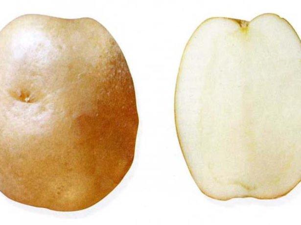 Картофель Лорх в разрезе