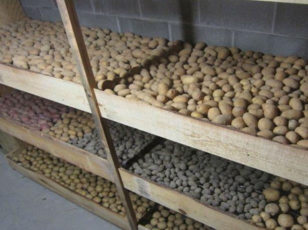 Картофель в хранилище
