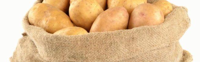 Картофель сорта Фермер на вашем приусадебном участке