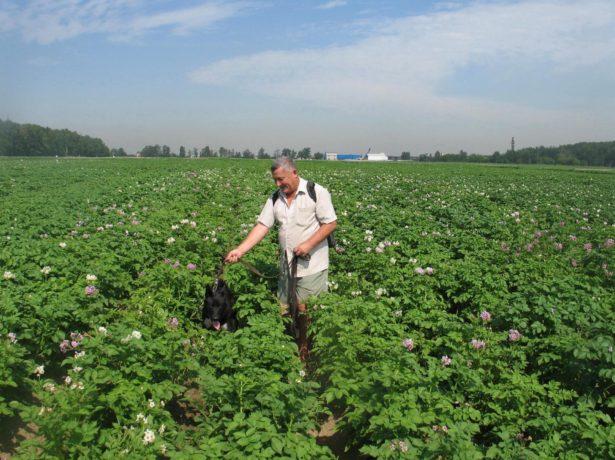 Мужчина в картофельном поле