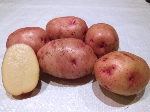 Мытый картофель Жуковский