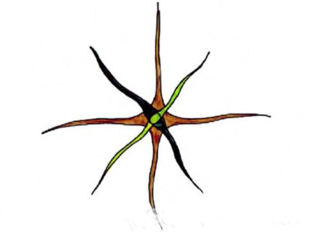Разреженно-ярусная обрезка кроны черешни