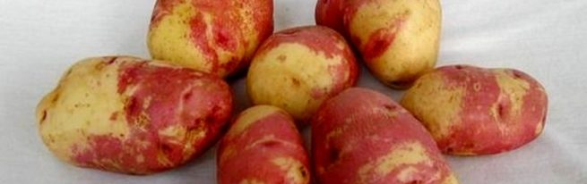 Горбачёвка, Кофта-юбка, Фестивальный —  у народного сорта картофеля Иван-да-Марья много имён