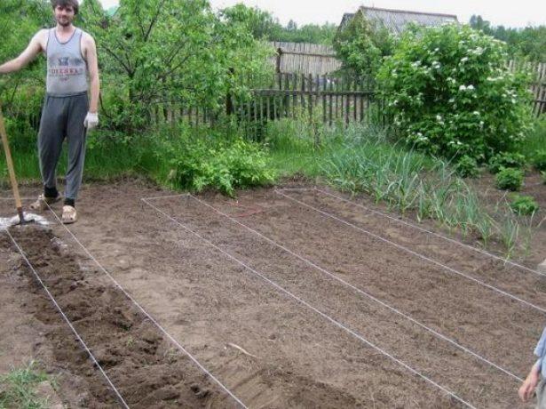 Участок для посадки картофеля