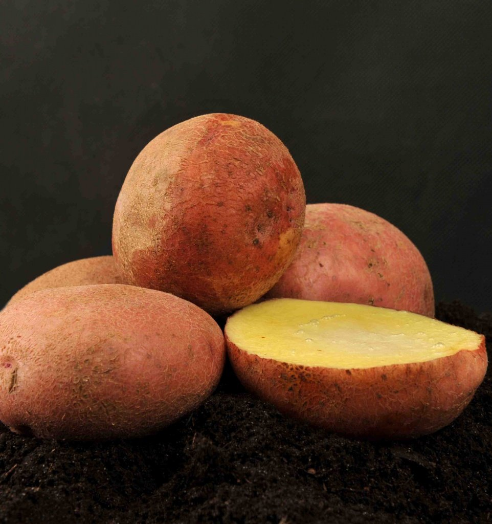 журавинка картофель фото