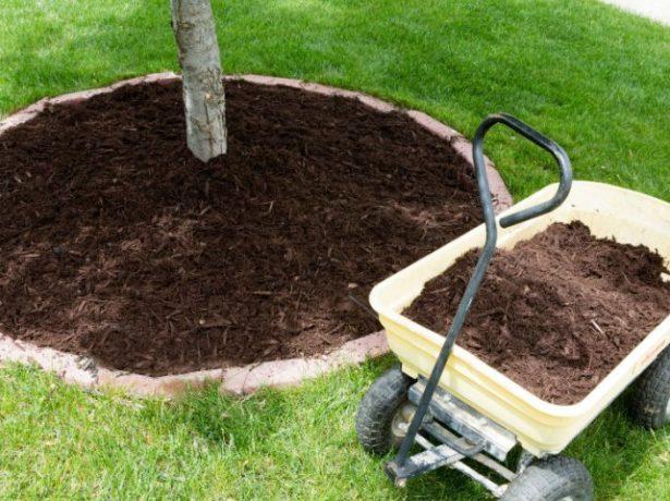 Мульчирование земли под плодовым деревом