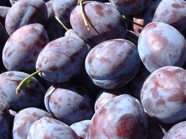 Плоды сливы сорта Богатырская