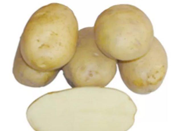 Барин картофель