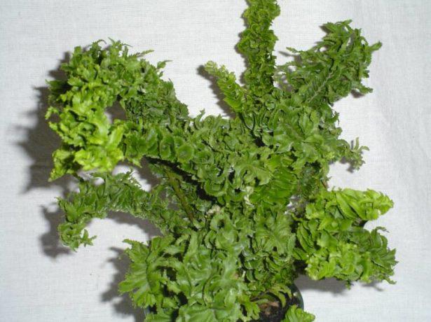 Комнатные цветы и растения Каталог с фотографиями и