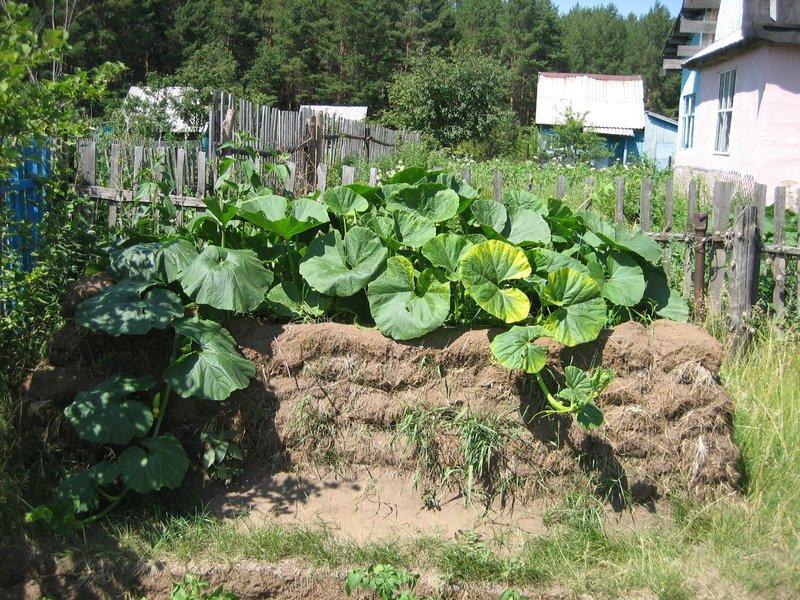 Выращивание огурцов и кабачков 619