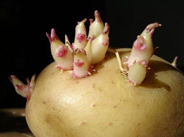 Картофель с глазками