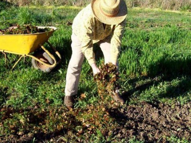 Внесение удобрений в почву