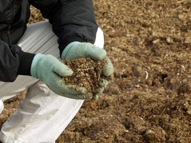 Удобрение почвы для огурцов