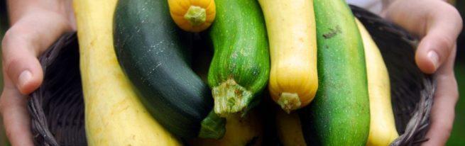 Кабачок и цукини — ботанические и кулинарные отличия