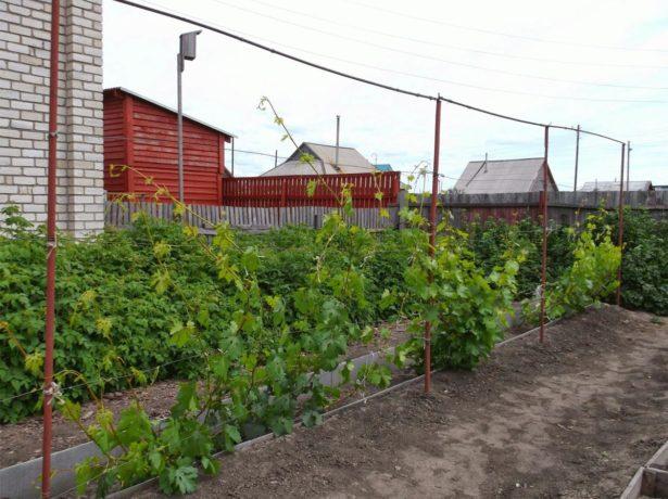 Одноплоскостная шпалера для винограда
