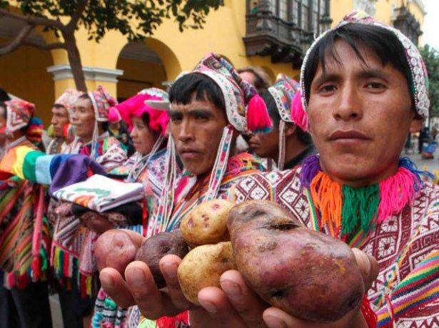 Праздник картофеля в Перу