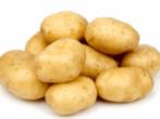 сорт картофеля Удача