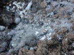 Внесение золы в почву