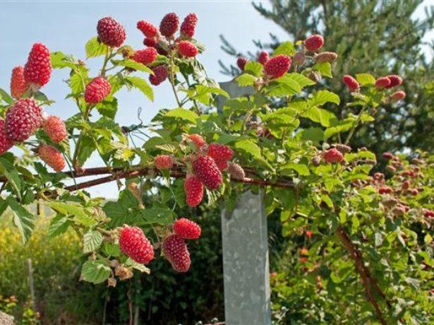 Чем удобрять сад осенью
