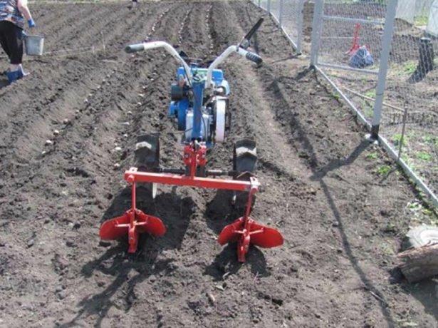 Мотоблок на картофельном поле