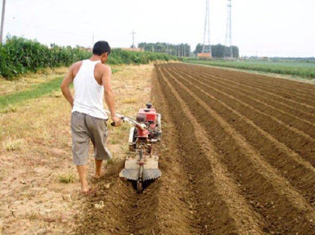 Подготовка борозд для посадки картофеля с помощью окучника
