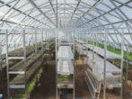 Стеллажи для растений