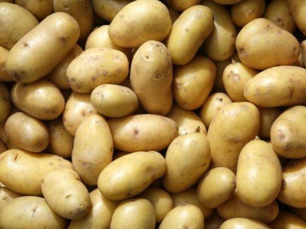 Клубни элитного картофеля