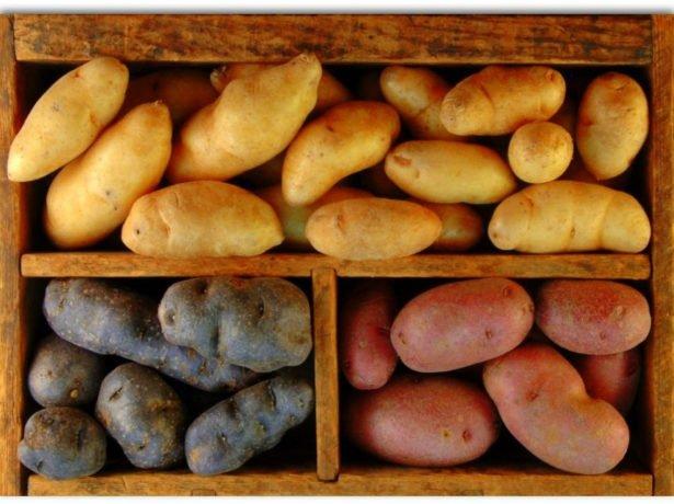 Сорт картофеля который хорошо хранится