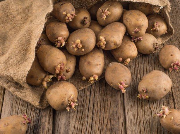 Проросший картофель в мешке