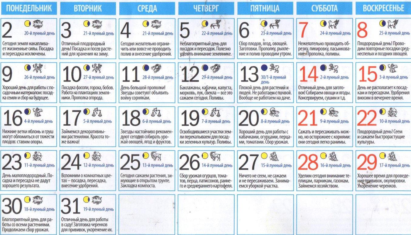 Календарь посадки баклажан: благоприятные дни, уход за всходами