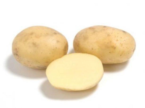 Сорт картофеля Коломба (Коломбо)