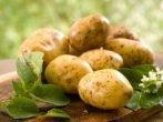 Сорт картофеля Кубанка