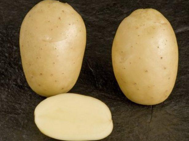 Сорт картофеля Леди Клэр