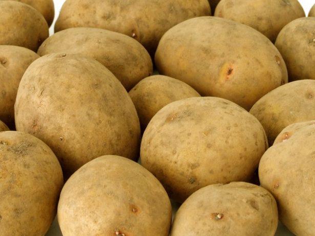 Сорт картофеля Ярла