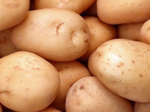 Сорт картофеля Илона