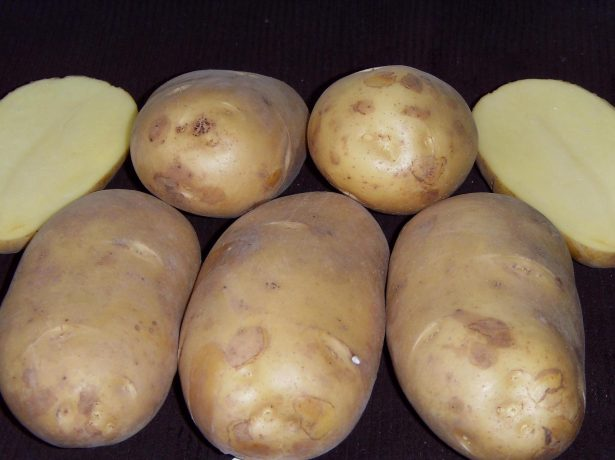 Сорт картофеля Чароит