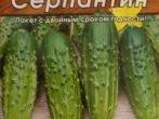 Сорт огурцов Серпантин