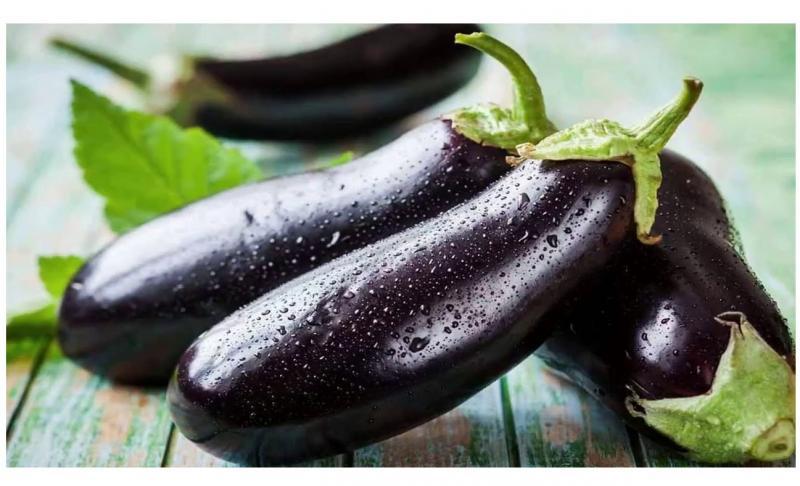 В чём причина отсутствия завязи на баклажанах, выращиваемых в теплице