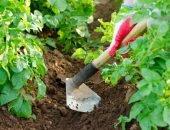 окучивание картошки тяпкой